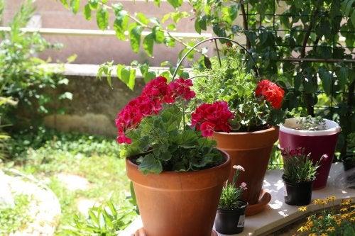 Flori de vara: 6 optiuni pentru gradina ta