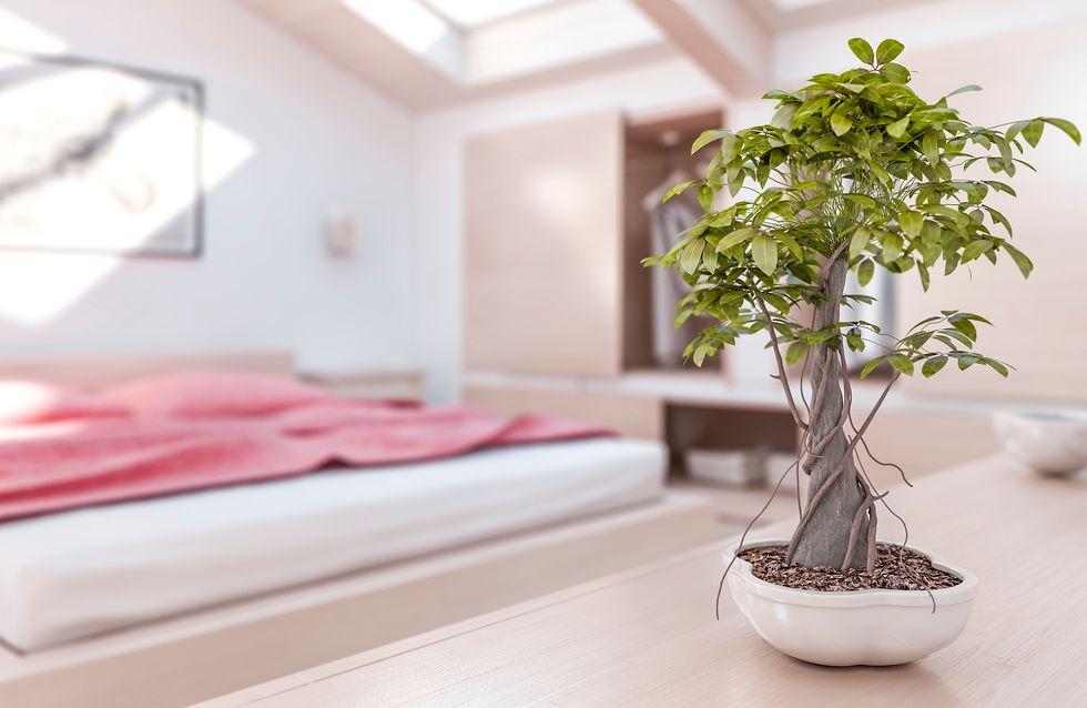 Plante de interior: stiti cum sa profitati la maximum de ele?