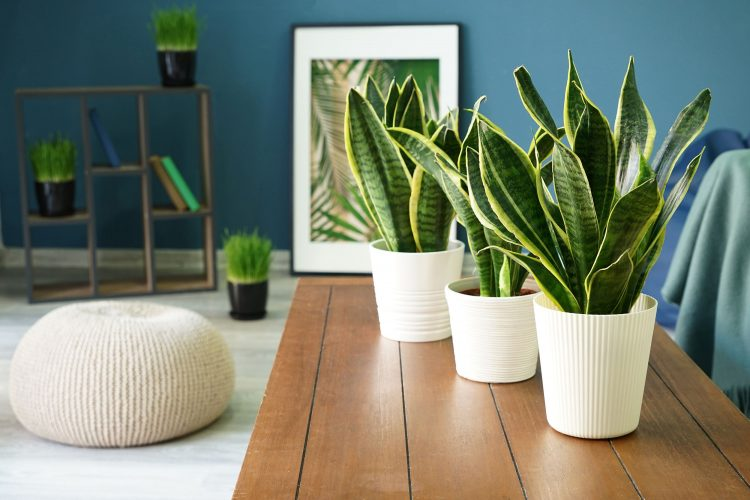 Beneficii surprinzatoare ale decorarii cu plante